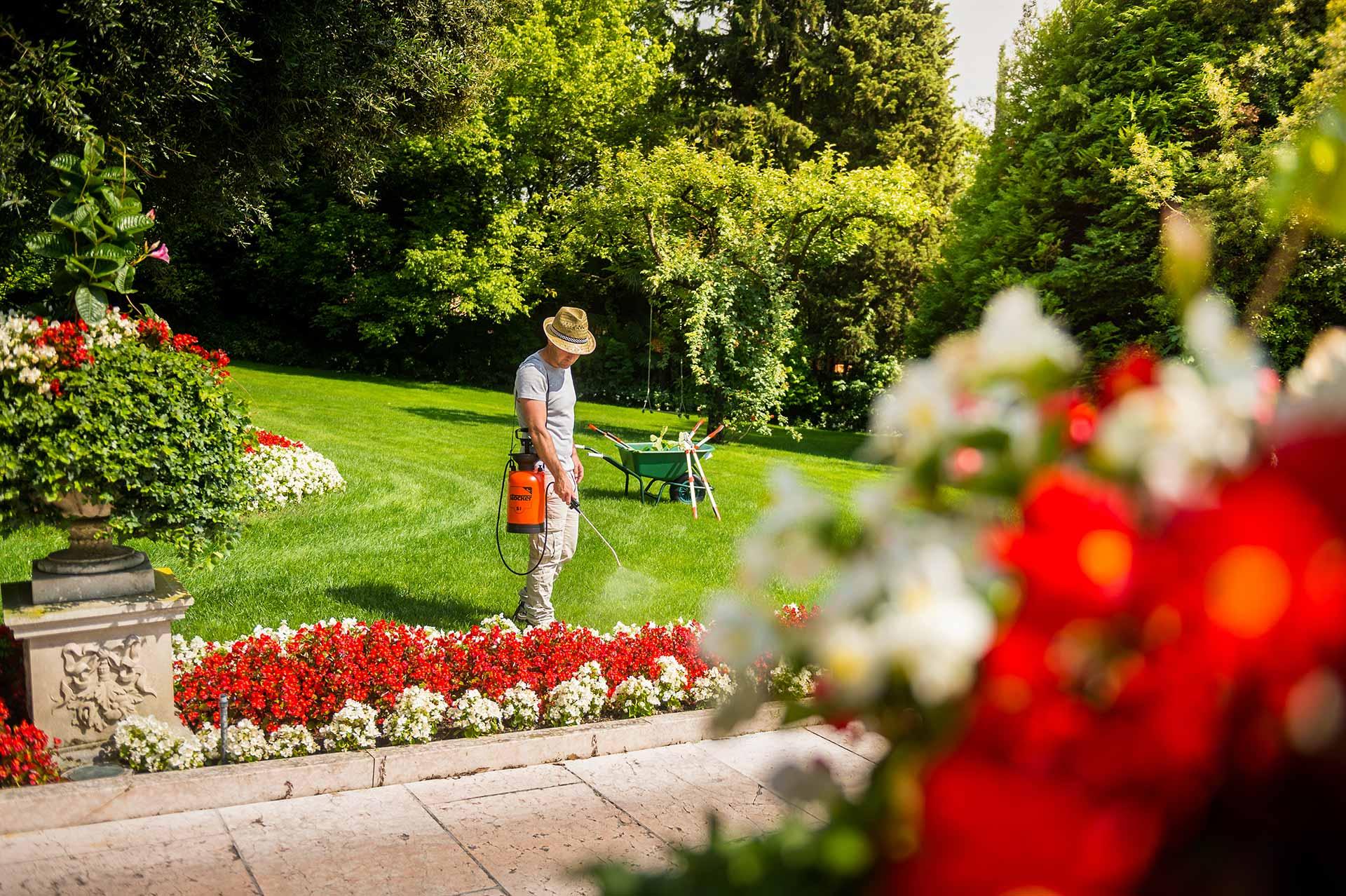 Combattere Afidi Delle Rose consigli sui trattamenti alle rose - stocker garden
