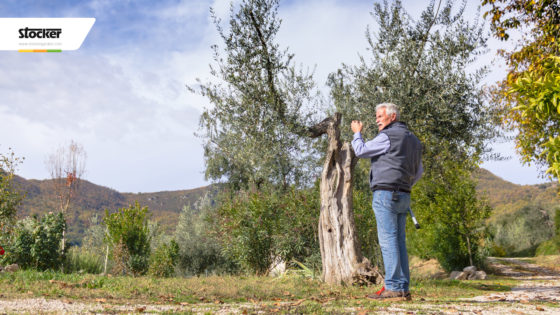 Thumbnail: Olivo: principali scelte agronomiche