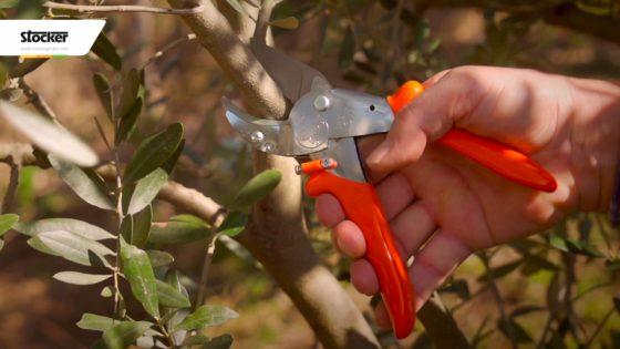 Thumbnail: La nuova forbice da potatura Löwe 10 - Taglio eccezionale, massima robustezza!