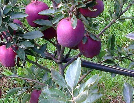 Carico di frutti equilibrato