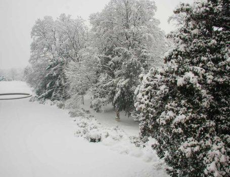 La neve pesante può causare la rottura dei rami
