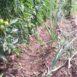 Pomodoro e cipolle