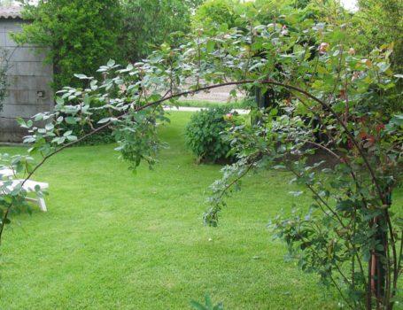 Foto: Curvatura dei rami per l'emissione di gemme fiorifere