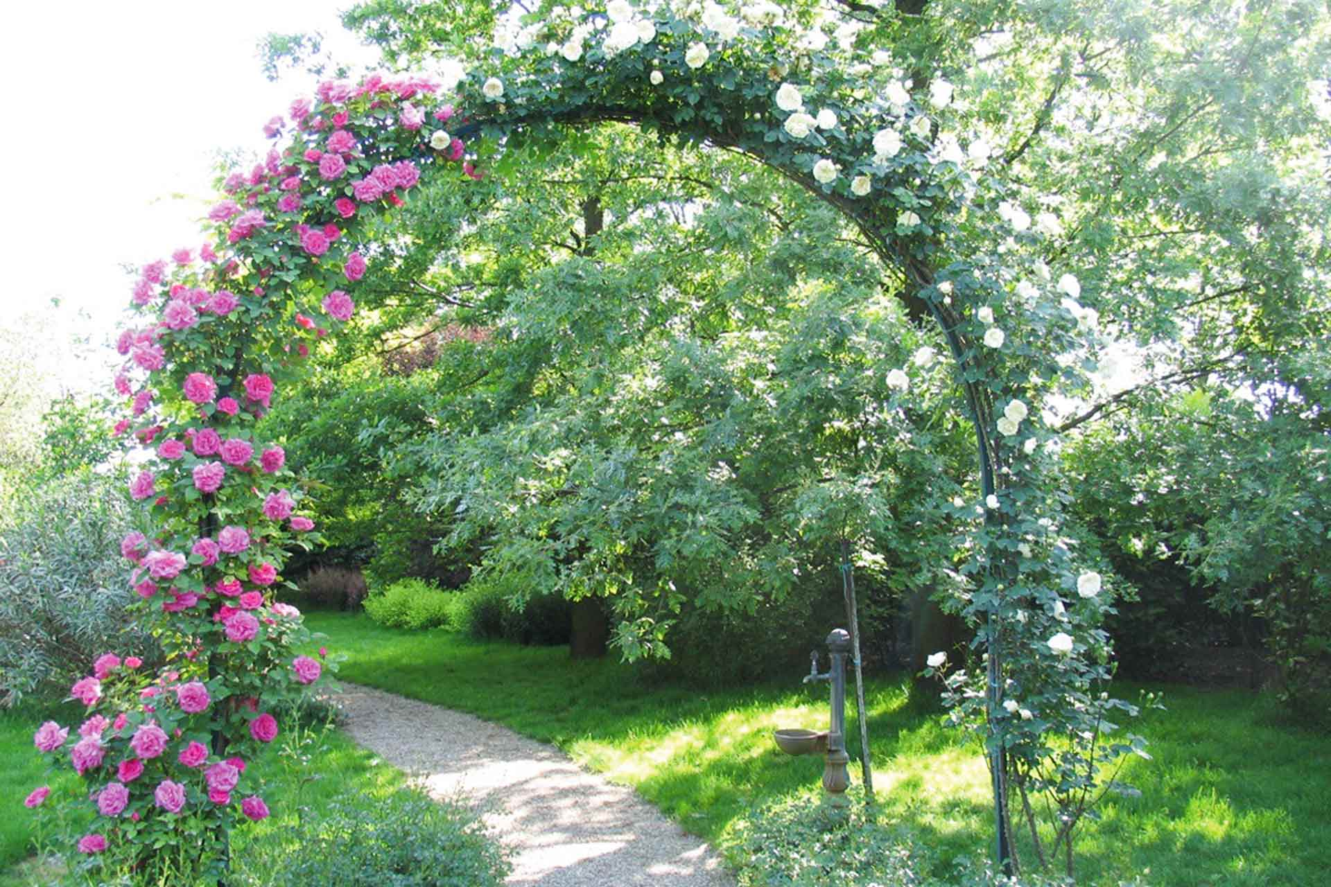 Tutori Per Rose Rampicanti come coltivare le rose - stocker garden