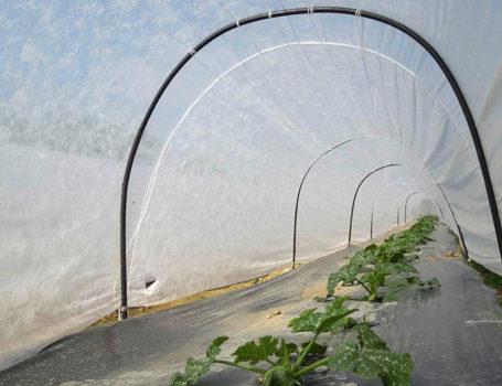 Dentro il tunnel nell'orto