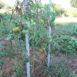 Ultimi pomodori della stagione