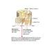 composizione di un ramo