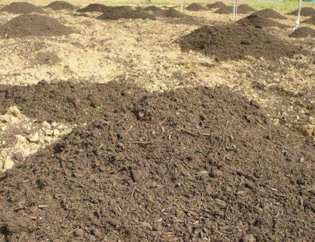 Mucchietti di compost da distribuire nell'orto