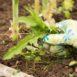 Gestione delle erbacce