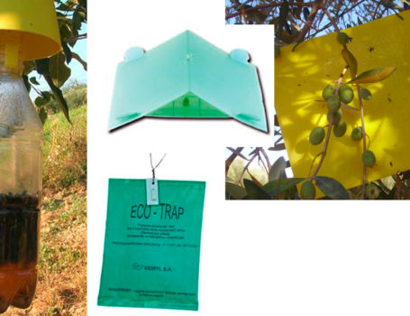 Trappola entomologica