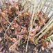 Polloni alla base della pianta