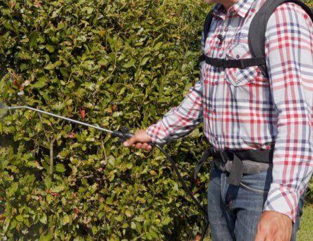 Trattamento antizanzare in giardino con pompa elettrica a zaino