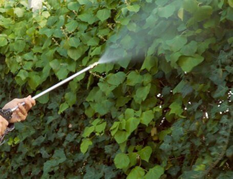 Trattamento antizanzare su siepe in giardino
