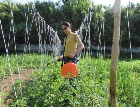 Trattamento su pomodori con pompa a tracolla